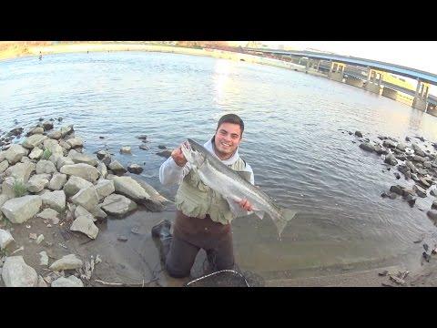 Steelhead Fishing Grand Rapids MI (Pure Michigan)