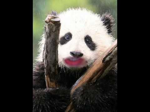 The talking panda ep.2