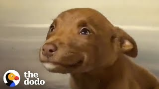This Adorable Puppy Wouldn't Stop Smiling in Her Shelter Kennel | The Dodo
