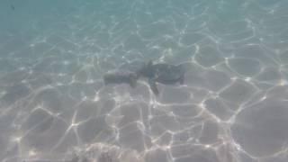 Snorkeling with Sea Turtles Napili Bay Maui Hawaii