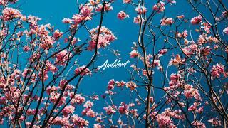Elskavon - Spring
