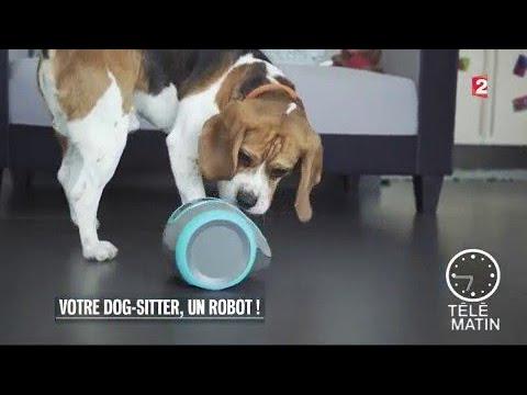 Nouveau - Votre dog-sitter, un robot !