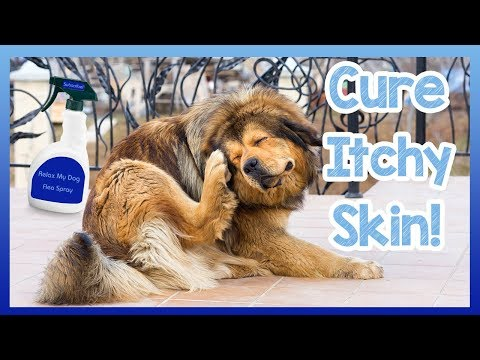 How to Cure Your Dogs Itchy Skin! Tips and Homemade Cures to Stop Your Dog Itching and Scratching!