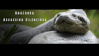 Anaconda Assassina Silenciosa