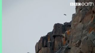 Chick Jumps Off Cliff | Life Story | Bbc Earth