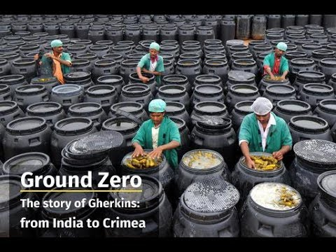Ground Zero The story of Gherkins:  from India to Crimea