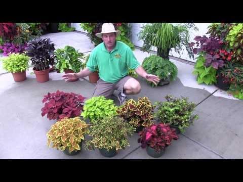 Foliage Plants: Part 2 (Shade Plants)