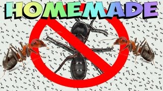 How To Get Rid Of Ants Forever Natural