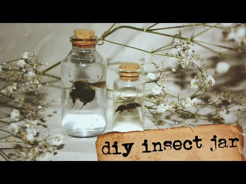diy insect jar || how to preserve insects in hand sanitizer