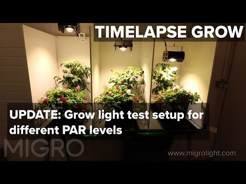 UPDATE - grow light test of different PAR levels   - TIME LAPSE GROW