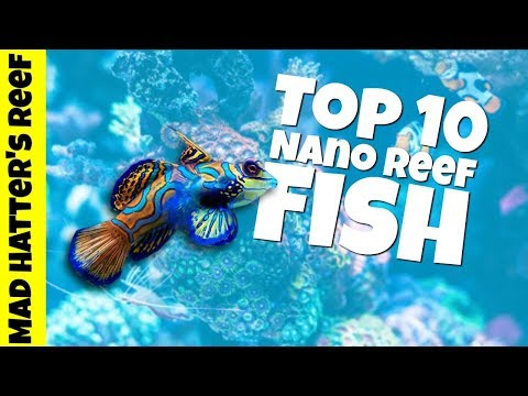 Top 10 Nano Reef Tank Fish