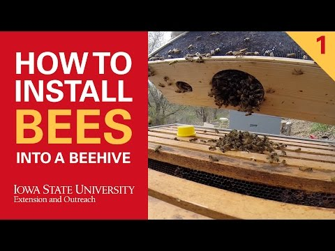 How to Install Bees Into a Beehive Part 1