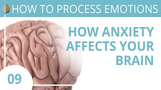How Anxiety Affects the Brain 9/30 How to Recognize and Turn off the Fight Flight Freeze Response