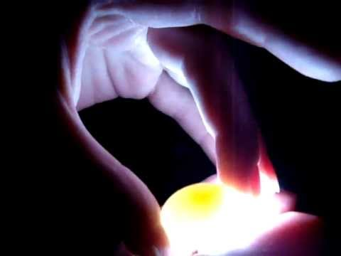 5-15-12 - Candling a non-fertile / infertile lovebird egg with easy flashlight method