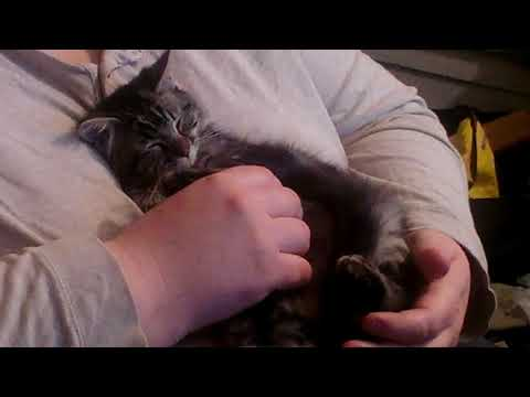 Adorable Kitten Needs a Home