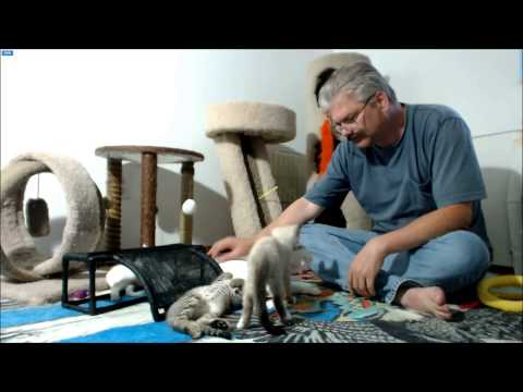 MythBusters Kittens - Post op visit and incision check