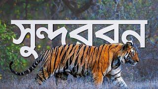 সুন্দরবন | কি কেন কিভাবে | Sundarban | Ki Keno Kivabe