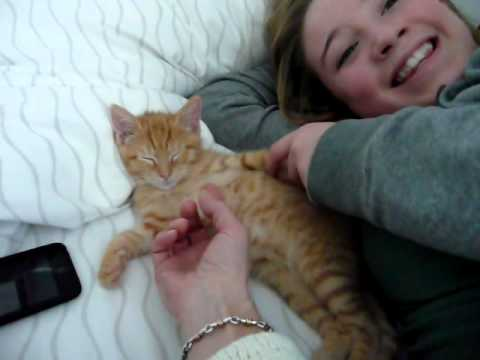 Rock-a-bye kitten goes to sleep with his belly rubbed...cute!