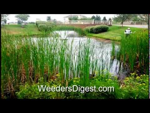 Best Pond Cleaning Tools