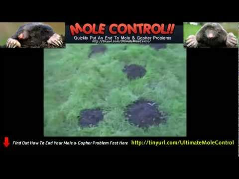 How To Get Rid Of Gophers In Yard - Best Mole Control