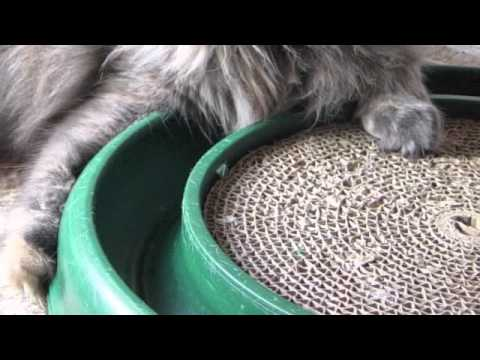 Teaching the Scratching Post