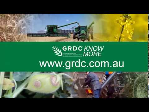Tactics to manage annual ryegrass – Peter Newman / 2018 Know More Series / Western Region