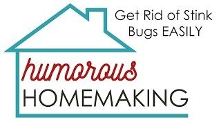 Get Rid Of Stink Bugs Easily