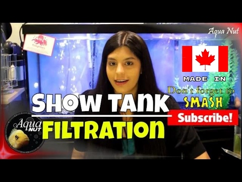 Show Fish Tank Filtration | Get Crystal Clear Water in Your Aquarium