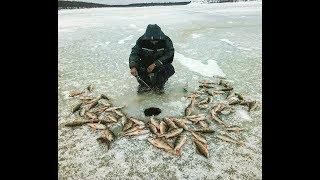 Вечерний клев окуня Якутия Yakutia