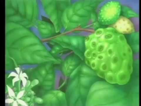 Noni Juice is the secret to good health