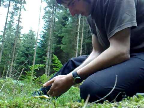 Rosebay Willow Herb - Wild Food