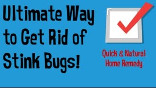 How To Get Rid Of Stink Bugs In The House Getting Rid Of Stink Bugs Q