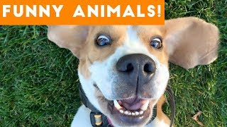Funniest Pets Of The Week Compilation December 2017 Funny Pet Videos