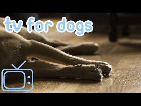 TV for Dogs After Surgery! Sheep, Dogs and Nature to Calm Your Stressed Dog After Their Surgery!