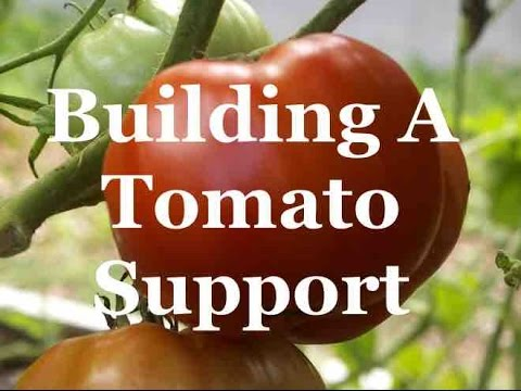 Tomato Growing Secrets - building a simple support