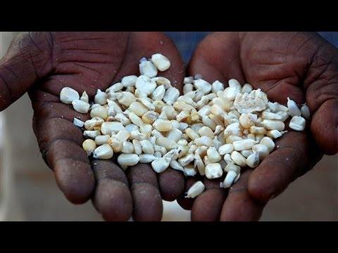 Bill Gates: GMOs Will End Starvation in Africa