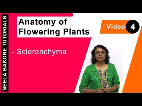 Anatomy of Flowering Plants - Sclerenchyma