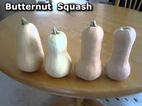 Fall Garden October Update Food Storage Roasted Butternut Squash Seeds