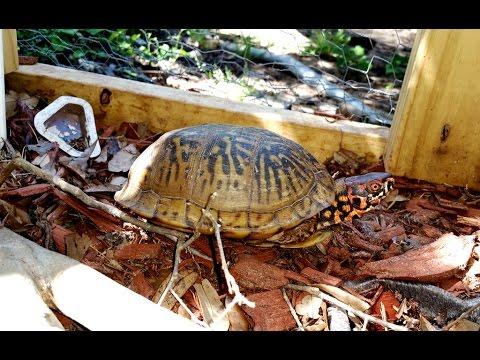 Box Turtle Enclosure