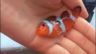Download 12 Most POISONOUS Fish In The World Video