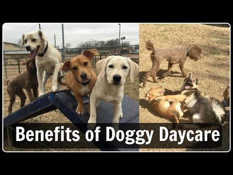 DOGGY DAYCARE  explained benefits and how it works