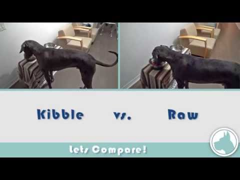 Transitioning From Kibble to a Raw Diet
