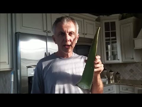Nick's Life - How to Remove the Aloe Vera Gel from an Aloe Plant
