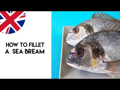 How to Fillet a Sea Bream