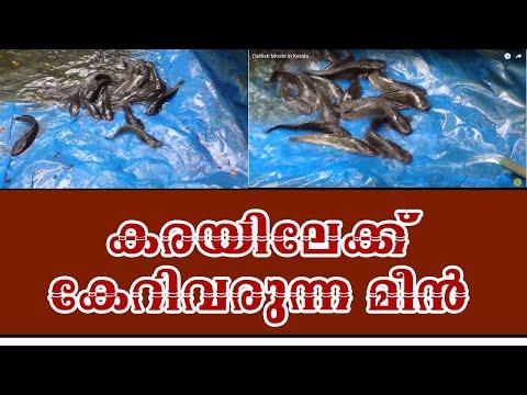 African Moshi in Kerala