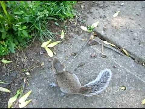 Atheist Kills Baby Squirrel With Golf Club