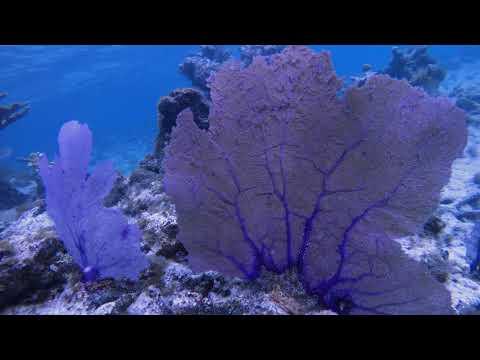 St John Cinnamon Bay Snorkeling - Rough Edit