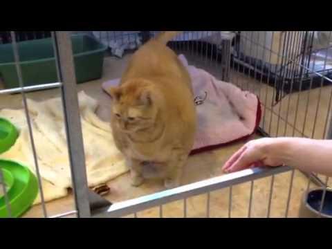 Overweight Cat Exercise Program