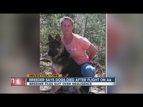 Breeder says dogs died after flight on American Airlines