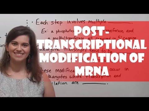 Post-Transcriptional Modification of mRNA